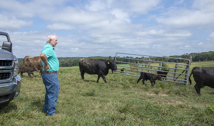 Stan-with-cows.jpg