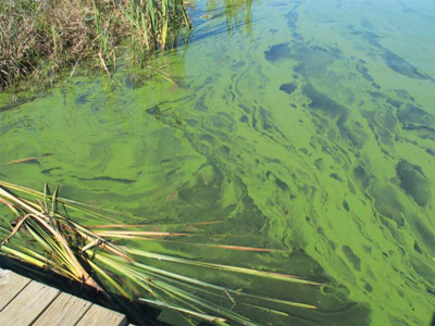 Indiana Officials Warn About Dangers Of Blue Green Algae Local