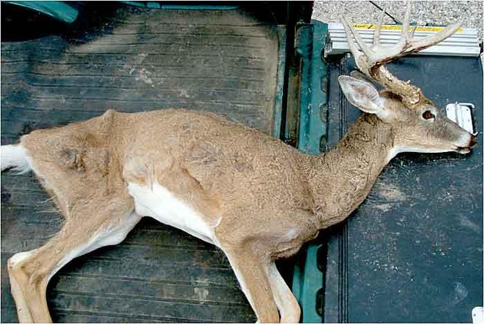 deer-chronic-wasting-disease.jpg