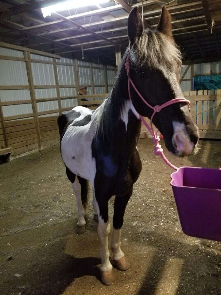 jake the horse.jpg