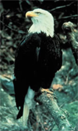 eagle_pose.jpg