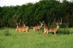 herd_of_deer_wall_mural.jpg