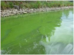 blue-green-algae-2.jpg