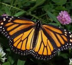 butterfly-200x183.jpg