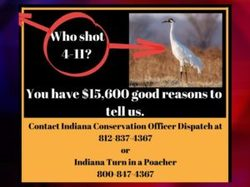 DNR-Crane-Killing-Reward-300x225.jpg