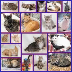 kittenssss.jpg