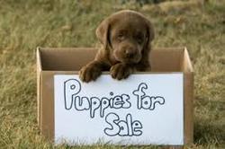 puppysale.jpeg