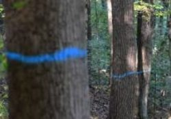 marked-tree-for-logging-215x150.jpg