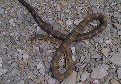 snake_0.jpg