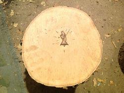 jesus-tree_1386256713690_1592954_ver1.0_640_480.jpg