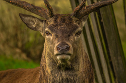 deer-deadliest-animal-america_wten.jpg